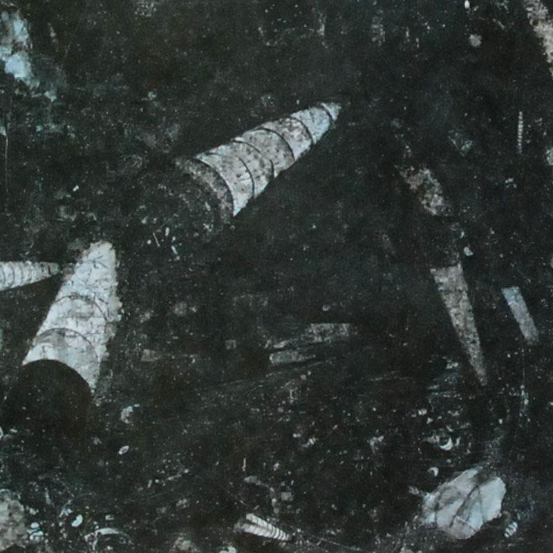 Fossil Black Marble Tiles Slabs And Countertops Black
