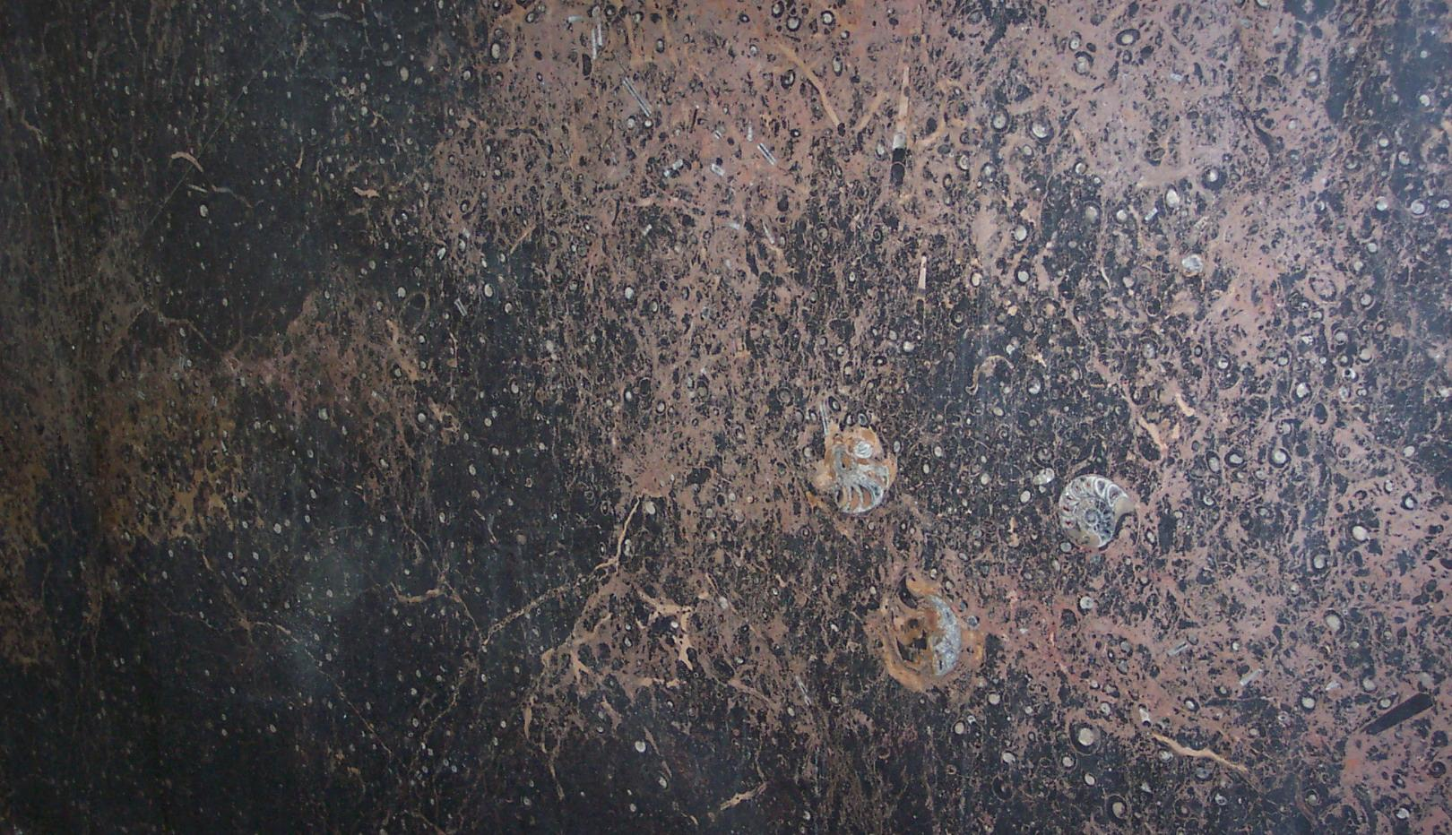 Brown Fossil Granite Tiles Slabs And Countertops Mixed